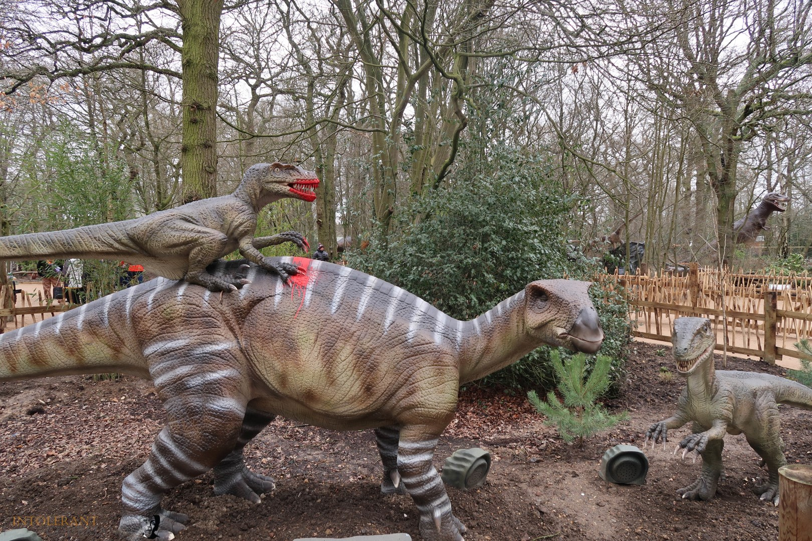World of Dinosaurs - part of Paradise Wildlife Park! It's an enclosure packed with 30 life size, moving and animated dinosaurs, featuring T-Rex, Stegosaurus, Tricerotops and more! It's a wonderful family day out with lots to explore! www.intolerantgourmand,com